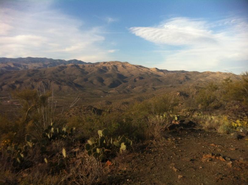 Gorgeous Tucson desert in Saguaro National Park