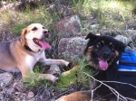 Bear and Chille relaxing together on the trail.